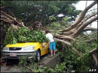在台北有200多棵樹被台風刮倒