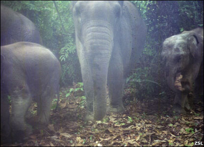 Elephants (Image: ZSL)