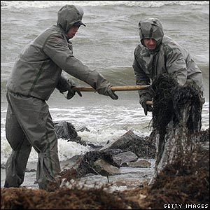 "These men are shovelling polluted seaweed. Experts have warned of an ""environmental catastrophe""."