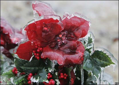 A flower covered in thick ice