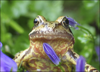 Frog - Pic by Sophie Livsey