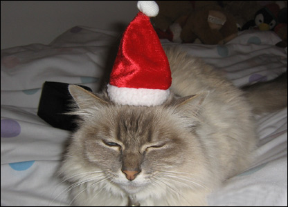 Jasmine the cat gets festive