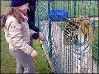 Chloe and a tiger