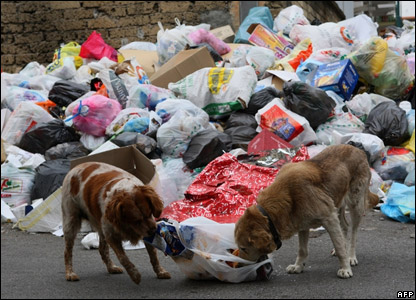 Dogs nosing through bags of rubbish