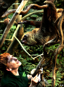 Zookeeper Lucy Hawley with a sloth in the Clore Rainforest