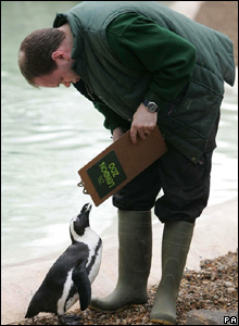 Zookeeper Darren Jordan takes note of an African Black Footed Penguin