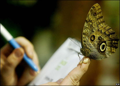 A Zoo Keeper makes a note of an Owl Butterfly