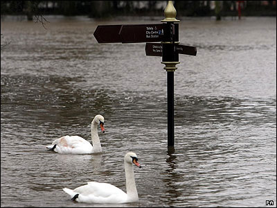 This pair of swans are taking a swim in floodwaters in Worcester!