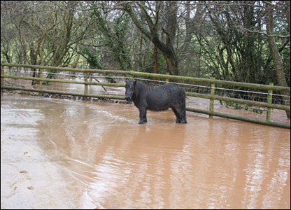 Pony in the flood water