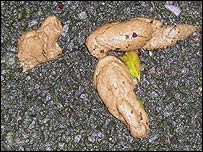 Laura took photos of dog poo on the streets near where she lives