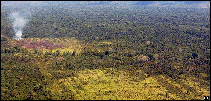 A burned area of the Amazon rain forest