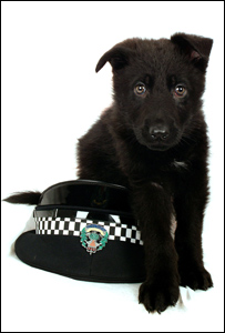 Tayside Police's newest dog