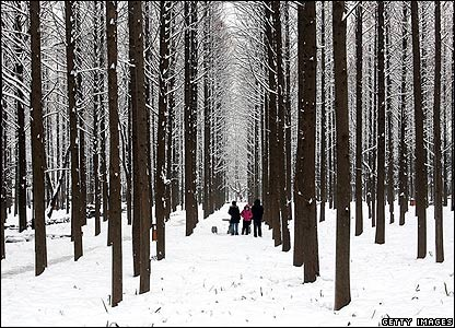 Residents walking in a wood