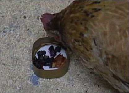 "But it hasn't put her off her food - and she's still laying LOADS of eggs. Her owners say she has a ""zest for life""."