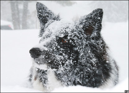 A dog covered in snow