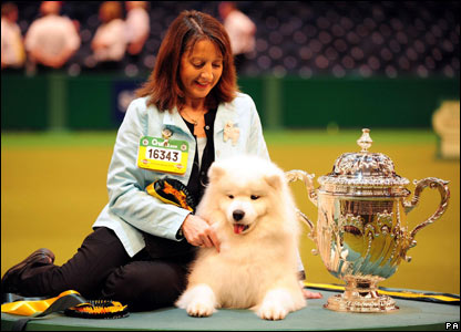 Hermioni, a Samoyed, was named Reserve Best in Show