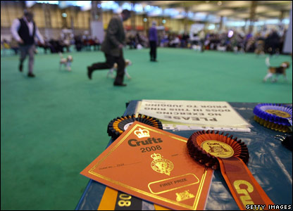 Dogs parade at Crufts for the chance of a prize