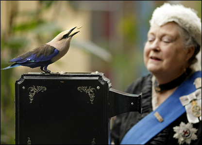 Lady dressed as Queen Victoria looking at a bird