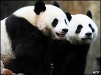 去年入住海洋公園的大熊貓盈盈和樂樂