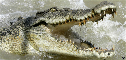 Crocodile (file photo)