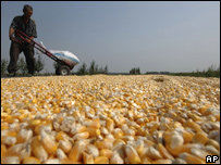 A farmer dries the corn grains