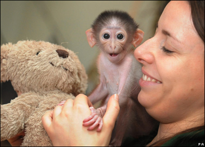 Conchita the monkey