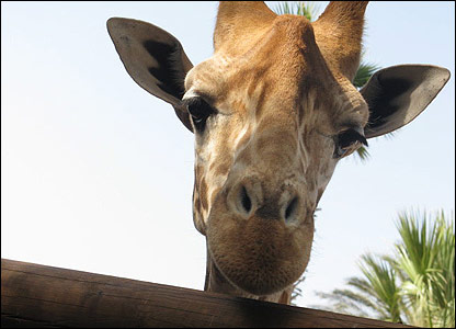 Michael also captured this curious giraffe on his hols too. Wonder what he's looking at?