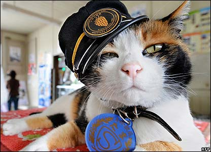This cat called Tama has been credited with helping to save a railway station in Japan.