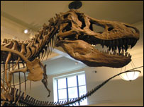 A T-Rex skeleton at the Natural History Museum