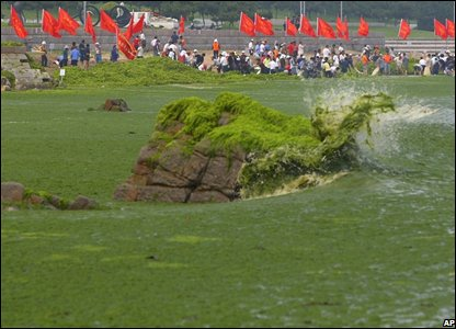 Algae in the water off the coast of Qingdap