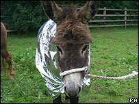 Eeyore recovering in a foil jacket