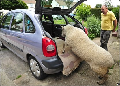 Nick Boing the ram climbing into the family car