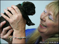 Bernann McKinney with one of the cloned pups