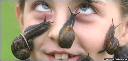 Tiana and her record-breaking snails - Pic from the Chester Chronicle