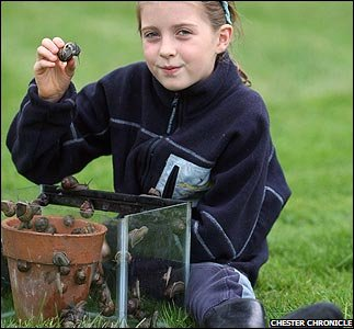 Tiana and her snails - Pic from Chester Chronicle