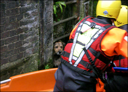 Dog being rescued (photo: Boris Lasserre)
