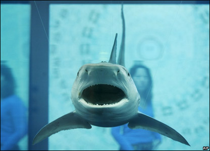 "Damien Hirst's ""The Kingdom"" features a shark in the chemical formaldehyde"