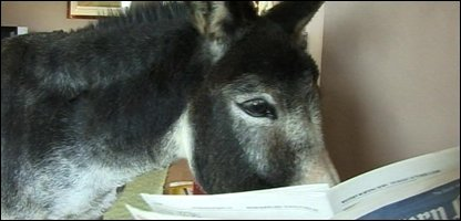 Holly the donkey