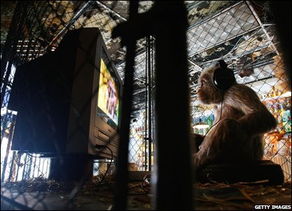 A monkey in the exhibition (Photo by Mario Tama/Getty Images)