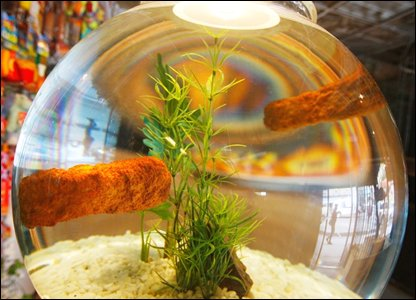 Fish fingers floating in a fish bowl