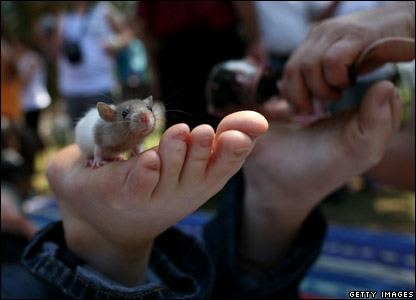 A mouse on someone's feet