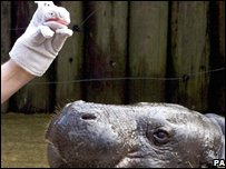 Hippo and glove puppet