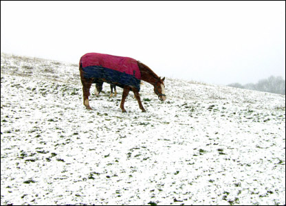 Emily's horse Domino in a snowy field