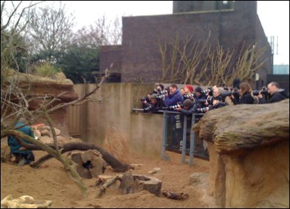 Crowd of photographers at the zoo