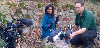 Sonali looking scared by the penguins!