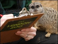 Zoo Keeper Mick Tiley carries out a count of Meercats Dominic Lipinski/PA Wire