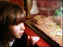 Girl looking at the lizard