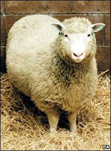 Dolly the sheep was born in the UK in 1996 and was the world's first cloned mammal. She lived for six years and gave birth to four lambs. Sheep normally live for 11-12 years. (PA)
