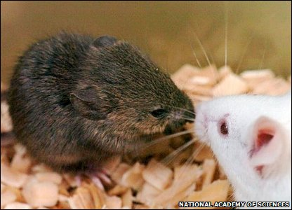 Mice that were cloned from frozen mice