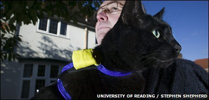 One of the tagged cats (pic: University of Reading / Steven Shepherd)